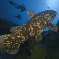 Explorations in Indonesia for the Coelacanths....