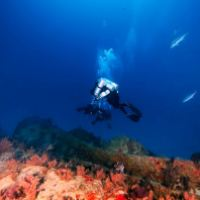 Diving the Vitric Wreck