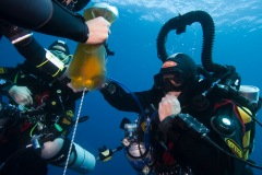 rehydrating during a dive in dahab